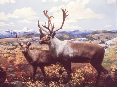 Hall of North American Wildlife