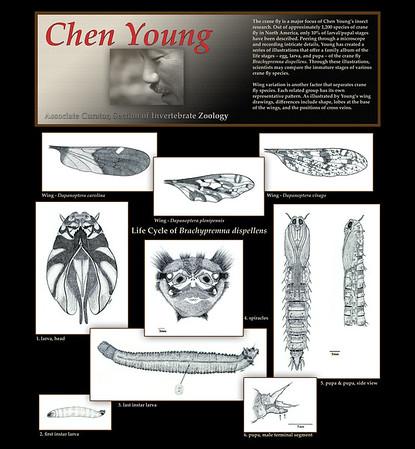 Chen Young - Scientific Art
