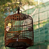 MACAO. A CAGED BIRD IN A PARK.