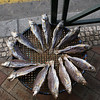 DEAD FISH [2]. MACAU.