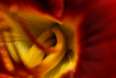 THROAT OF A LILY