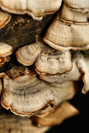 NATURE'S DESIGN...WOOD FUNGUS