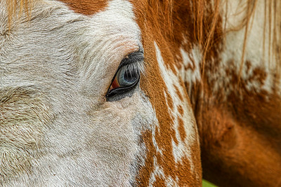 """Up close with the """"Red Head"""" next door..."""