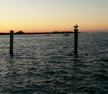 Pelican enjoys the sunset...Key West, Fla. Marina 4/23/14