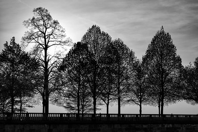 Castle Trees