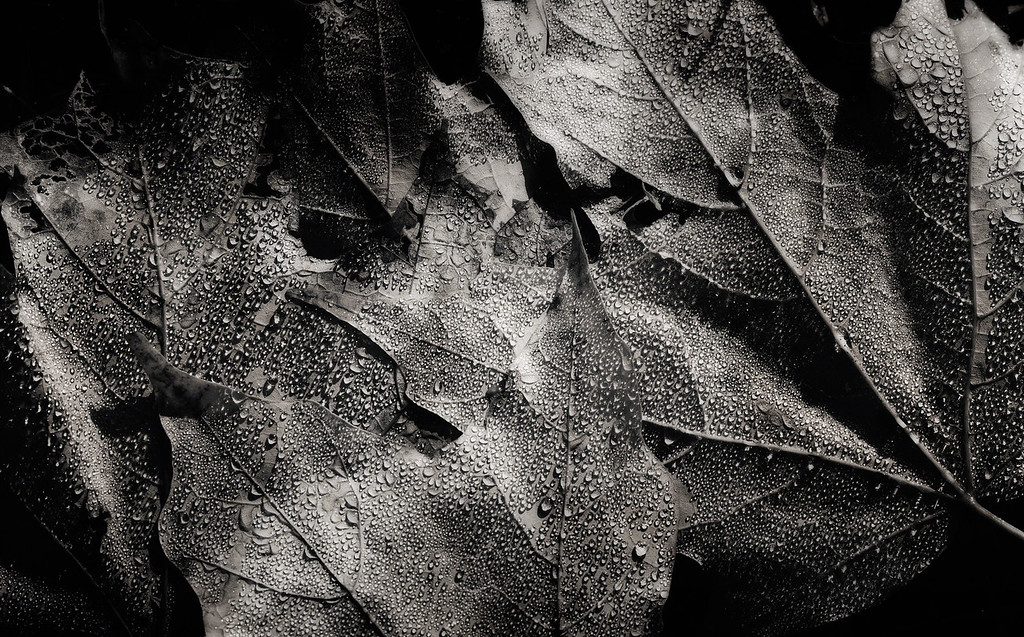 The Dance of Beads on Leaves