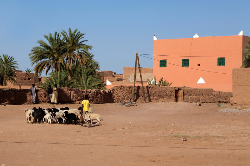 TAGOUNITE. DRAA VALLEY. MOROCCO. YOUNG BOY WITH GOATS.
