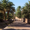 TAGOUNITE. DRAA VALLEY. MOROCCO. ROAD WITH PALM TREES.