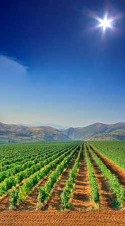 Vineyard field near Veles, Macedonia