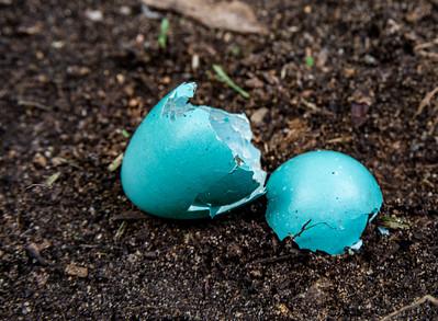 Robin Egg Macro