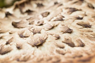 Macro Mushroom Spore