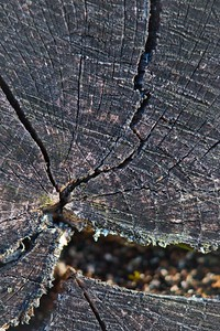 Tree Trunk Detail