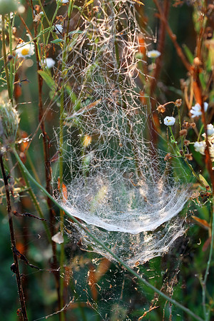 Bowl and Doily Spider Web