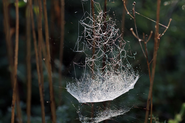 Bowl and Doily Web