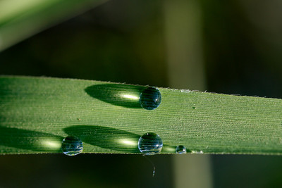 Water drops in the morning light