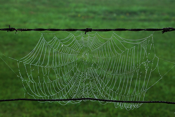 Dewy Web on the Fence