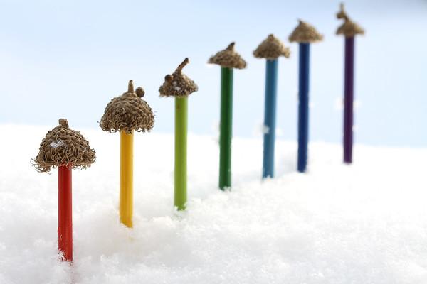 Bur Oak Acorns make cute hats