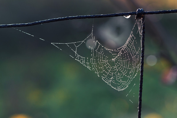 Web with morning dew