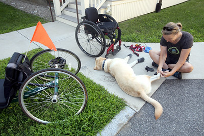 AMY SWEENEY/Staff photo.   Chris Slavin puts socks and botties on a very unhappy Earle (Earle does not like wearing his sox and shoes) before he goes for a walk on the Danvers Rail Trail with her on a hot day.  The booties are also used in the winter. on Christmas Eve 2015 to be her mobility assistance dog. June 2018​