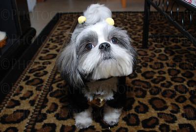 Bumblebee dog