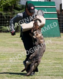 dogstock2010-3154