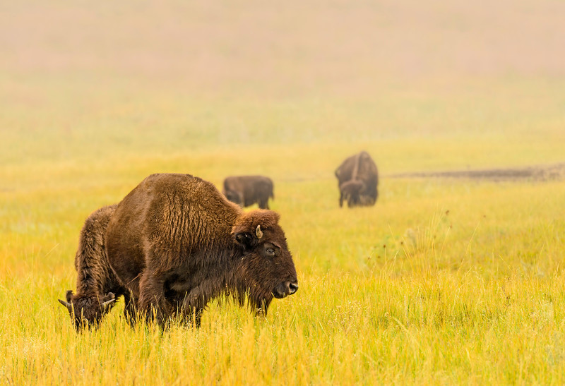 Lifting_Fog-BisonRoundup_Sep262013_0010