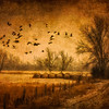 Cranes Over Snowy Hay Rolls-Textured-CranesNE_2014Mar18_2607
