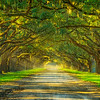 Oak Lane-Wormsloe Plantation-Savannah-Oct112014_0689
