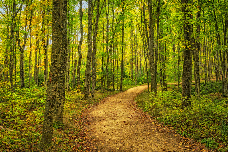 Into_The_Forest-Michigan_Fall_Color_Oct122016_0319