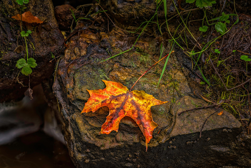 Fallen_Glory-Oct112016_Lake_Superior_Fall_Color_0014-HDR