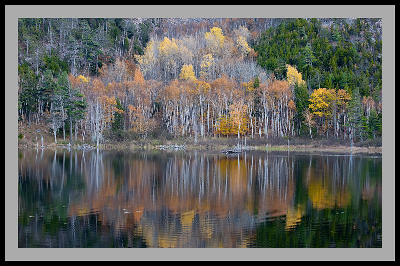 Foliage Reflections -5440