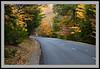 Foliage Road -5550