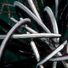 Feather Star <i>(Crinoidea)</i>  detail