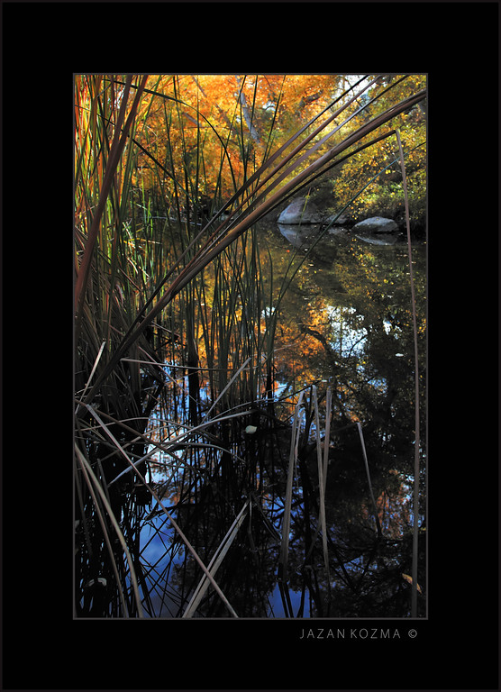 CatTails in the Fall