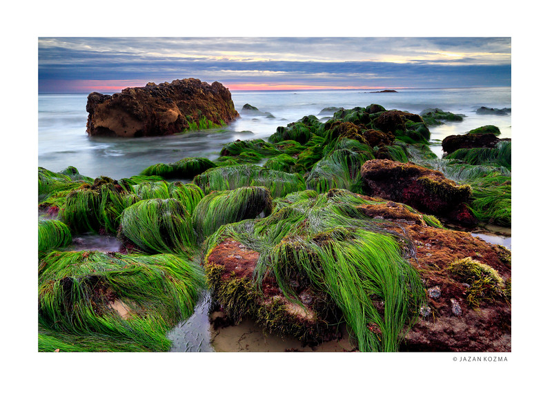Green Sea Grass - Red Sunset