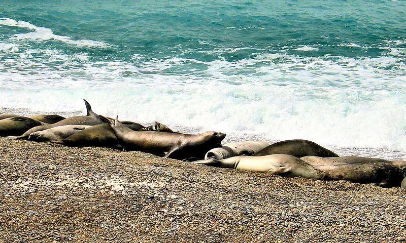 Sea Lions x