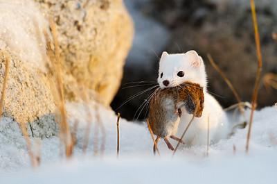 Landliving Mammals