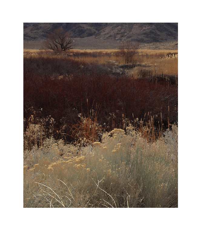 Owens Valley Grasslands