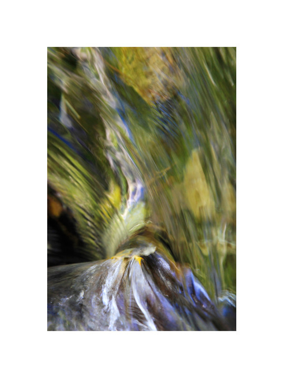 Water Wings - Leaves in Stream with Reflection of trees and sky overhead. Eastern Sierra