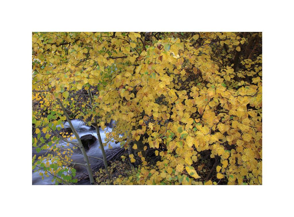 Chopsticks - Bishop Creek, Fall Colors Eastern Sierra