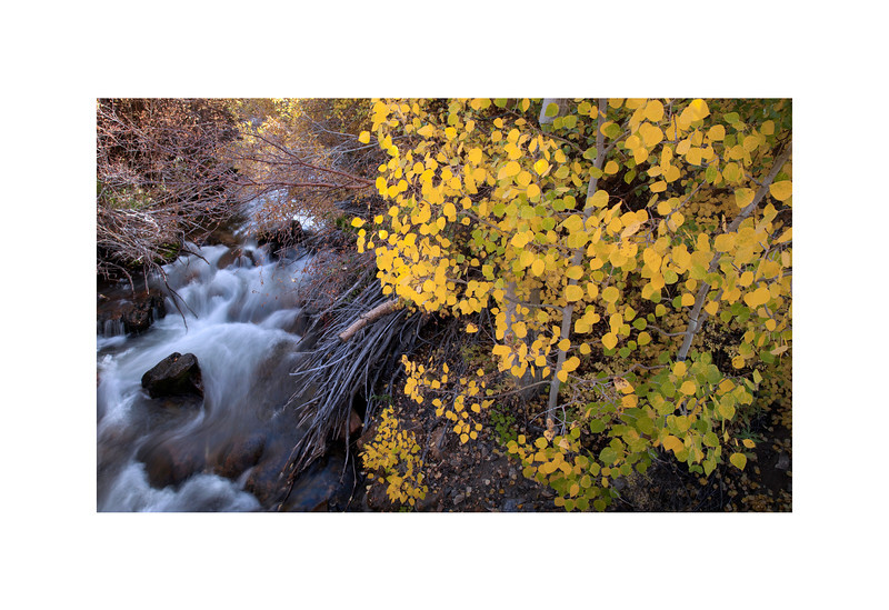 Bishop Creek and Aspen -  Eastern Sierra In the Fall