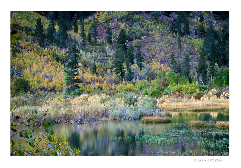 The Cool Blues of Morning - Lundy Canyon beaver pond - Fall 2015 Eastern Sierra