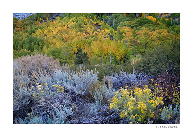 Fall color in the high Sierras