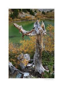 Barney Lake Deadwood - Fall 2015