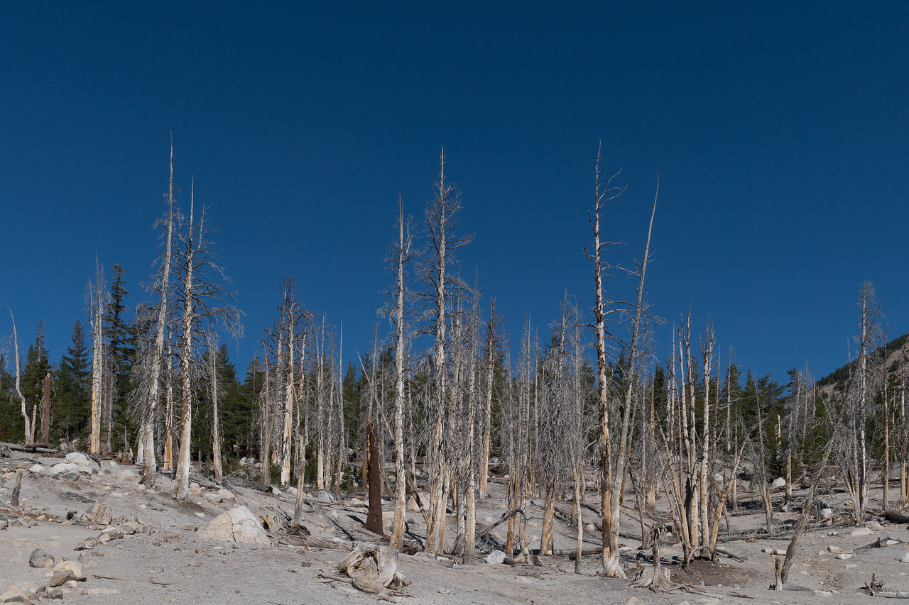 Dead trees at Horseshoe Lak
