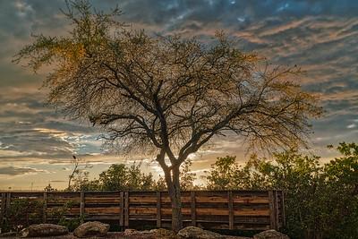 Tree Aglow
