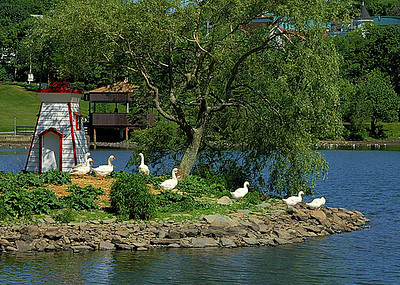 20 Sullivan's Pond