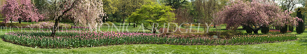 Sherwood Gardens canvas