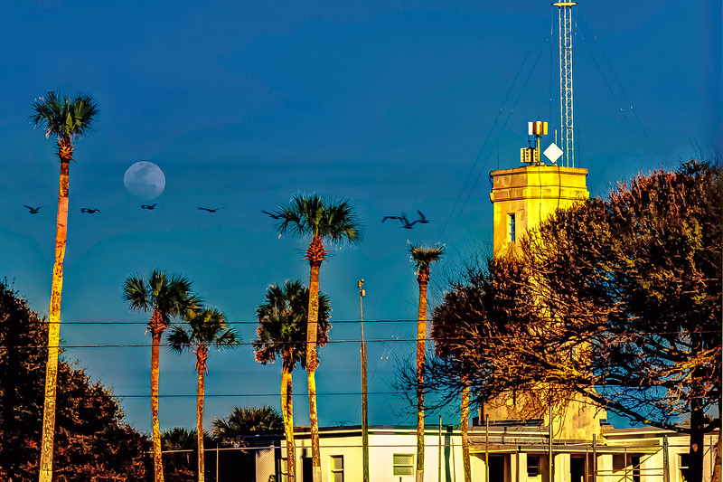 Lighthouse Moon Pelicans