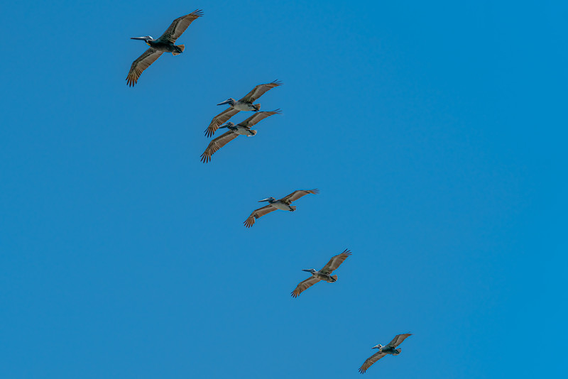 Formation Flying in the Wild Blue